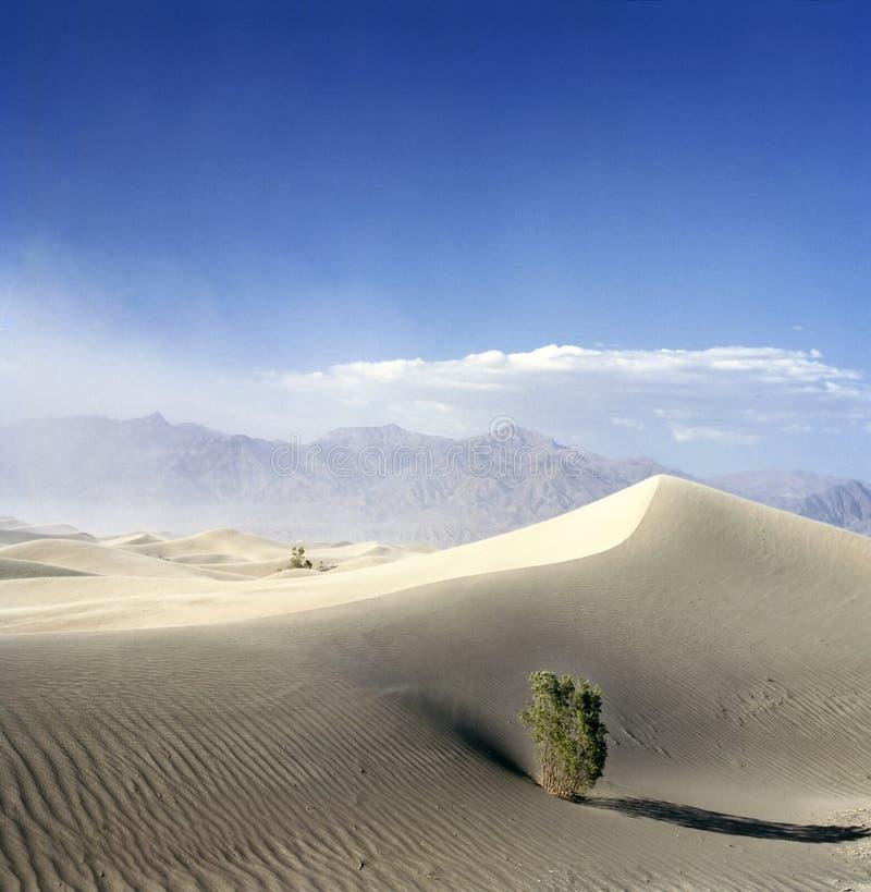 Albero in Death Valley con tempesta di sabbia imminente fotografia stock libera da diritti