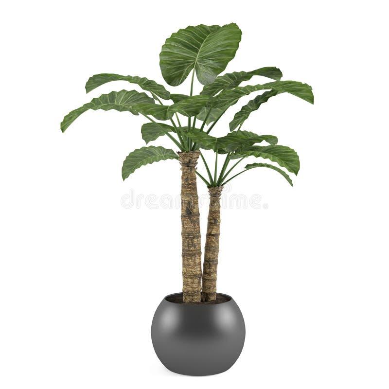 Albero decorativo della pianta della palma nel vaso della palla illustrazione vettoriale