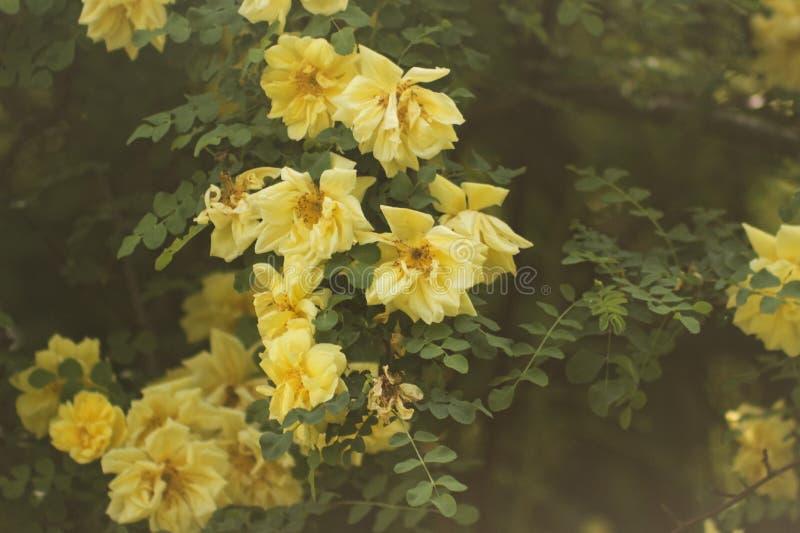 Albero dei fiori ed erba soleggiata immagini stock libere da diritti