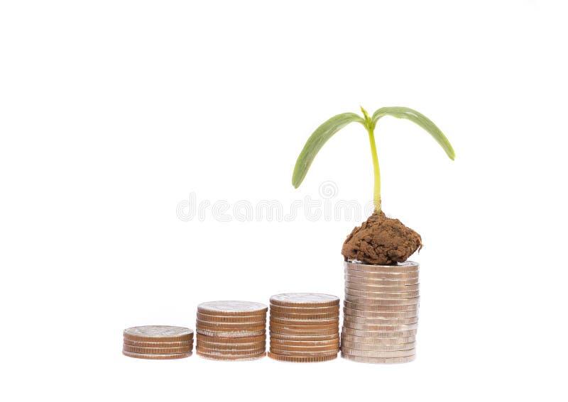 Albero dei soldi della moneta immagine stock