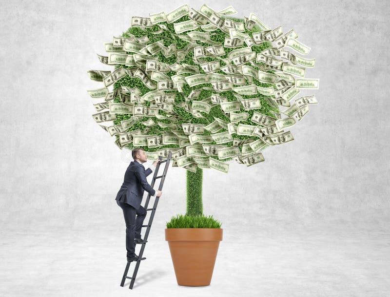 Albero dei soldi di concetto di crescita di affari fotografie stock libere da diritti