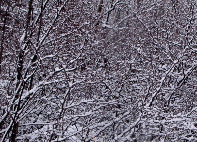Albero del cratego dopo una tempesta della neve fotografie stock