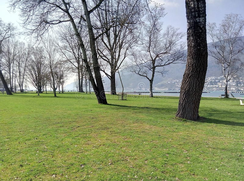 Albero del lago fotografie stock