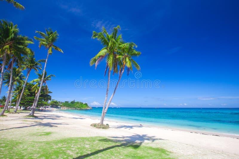 Albero del plm della noce di cocco e della spiaggia, spiaggia di Langob, isola di Malapascua, Cebu fotografia stock