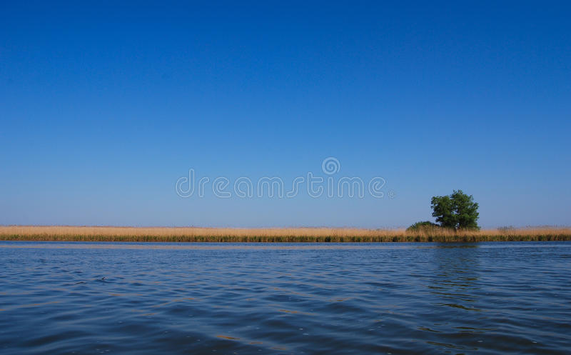 Albero del Solitaire vicino al lago fotografia stock