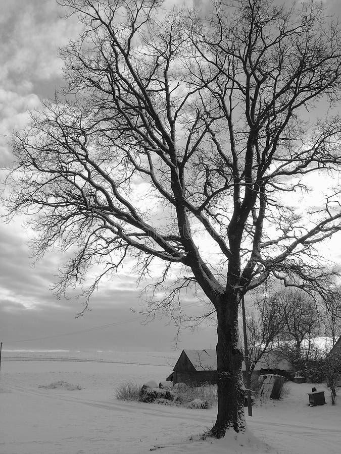Albero del villaggio fotografie stock