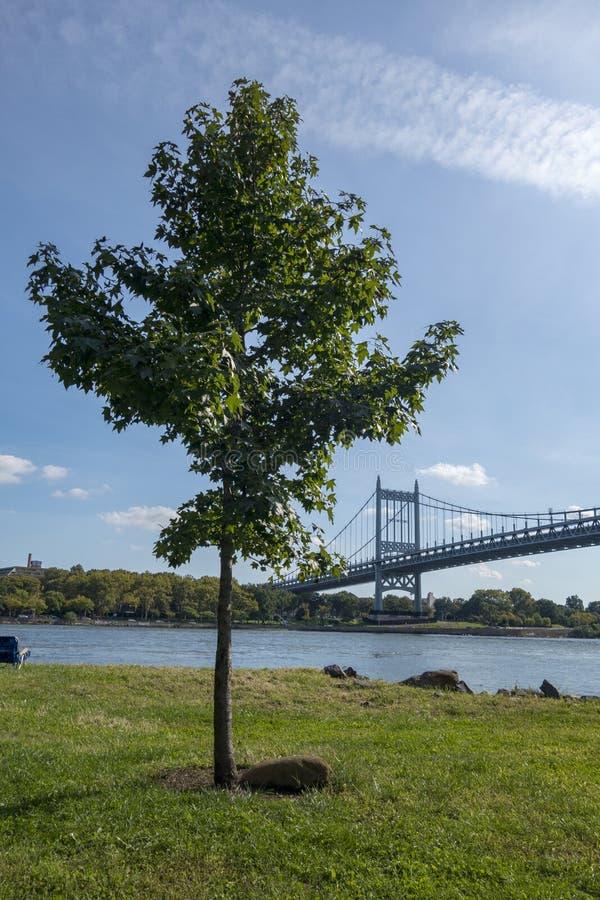 Albero dell'isola di Randalls in un parco con il canale navigabile e New York il ponte di Triborough, Robert F Kennedy Bridge, immagine stock