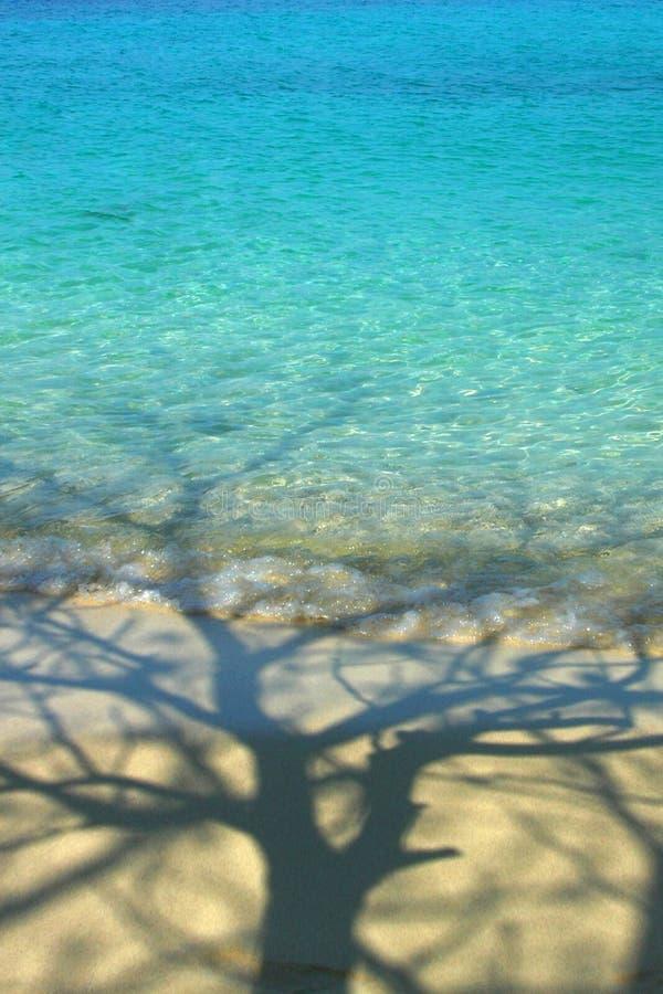 Albero dell'ombra in mare fotografia stock libera da diritti