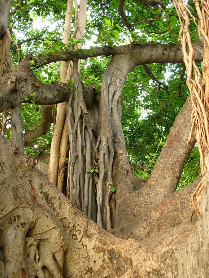 Albero della giungla fotografia stock