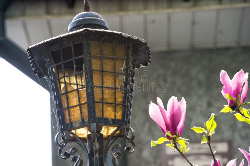 Albero della lampada e della magnolia di via in fioritura immagini stock libere da diritti