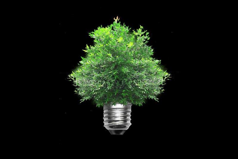 Albero della lampadina fotografie stock libere da diritti