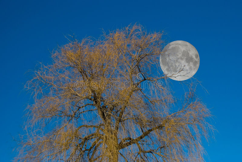 Download Albero della luna immagine stock. Immagine di cielo, siluetta - 3894251