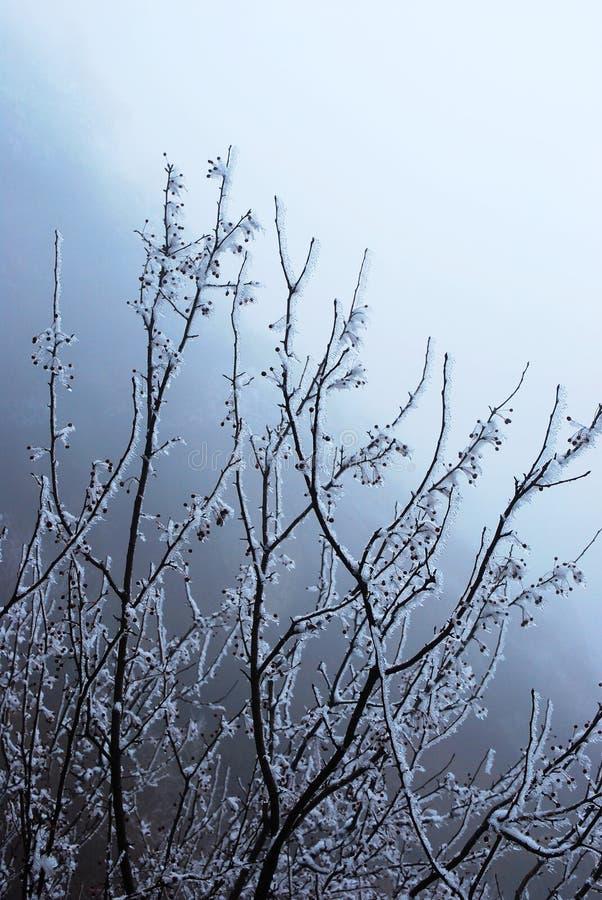 Albero della neve immagini stock libere da diritti