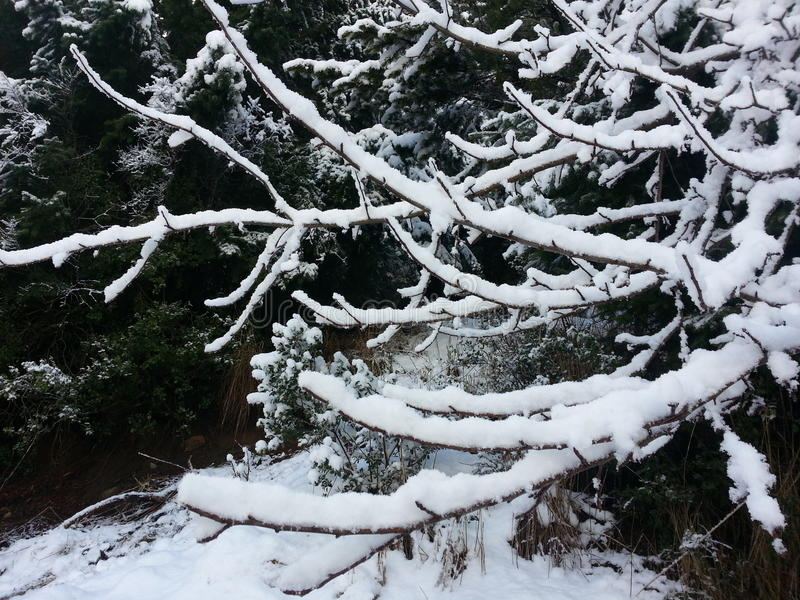 Albero 2 della neve fotografia stock libera da diritti