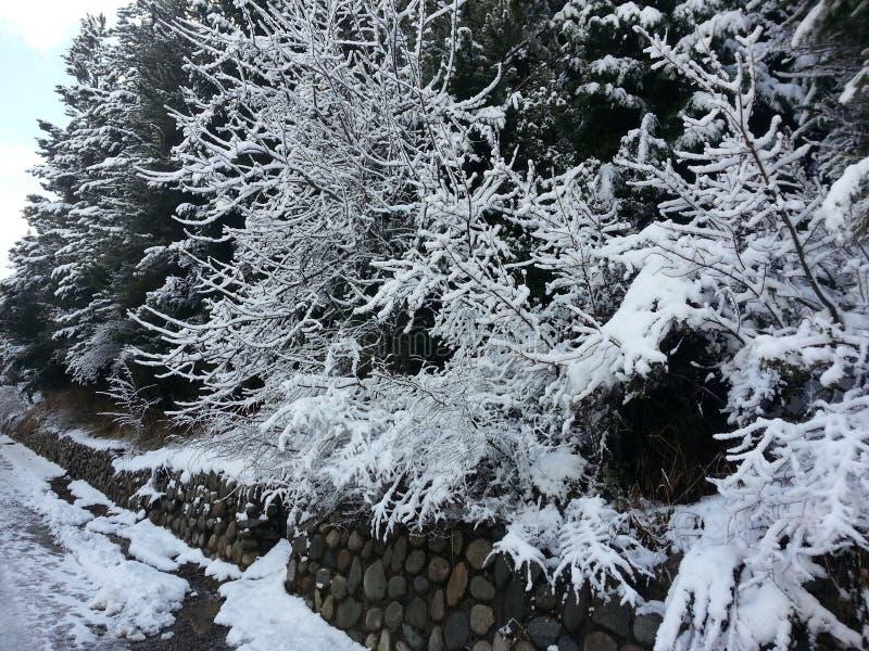 Albero 9 della neve fotografie stock
