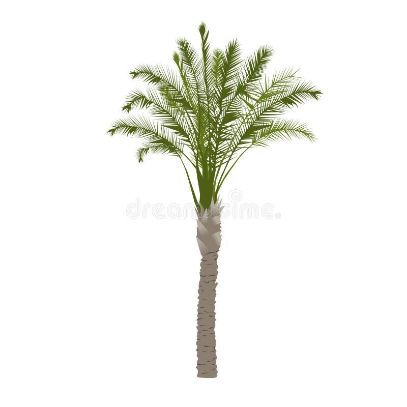 Albero della palma da datteri a colori illustrazione di stock