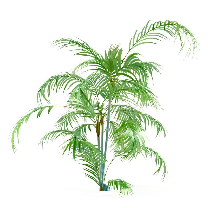Albero della pianta della palma isolato illustrazione di stock