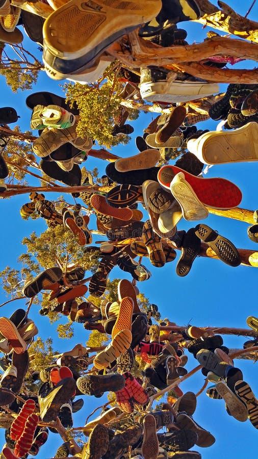 Albero della scarpa della giunzione di hallelujah, California fotografia stock