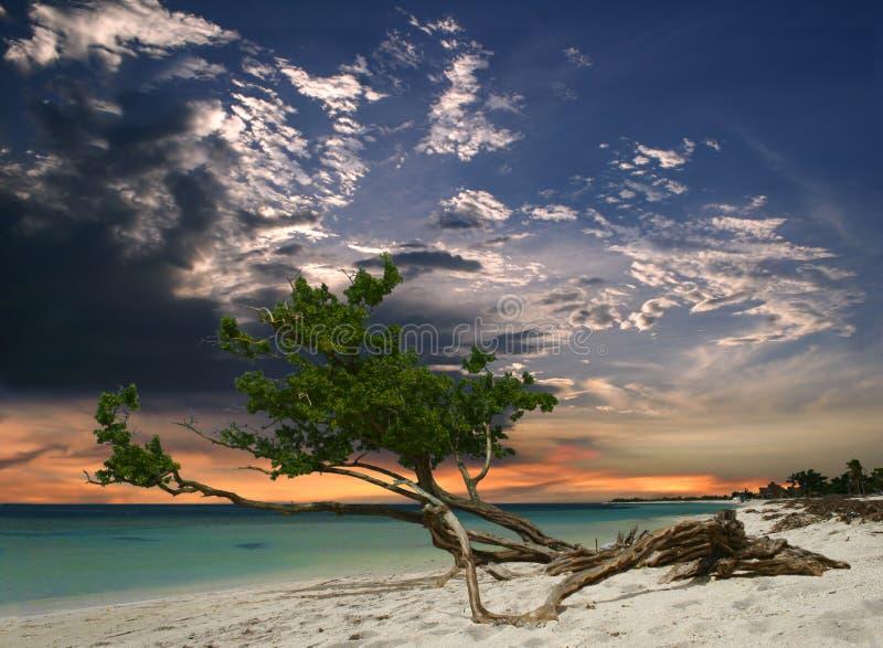 Albero della spiaggia di sera fotografia stock