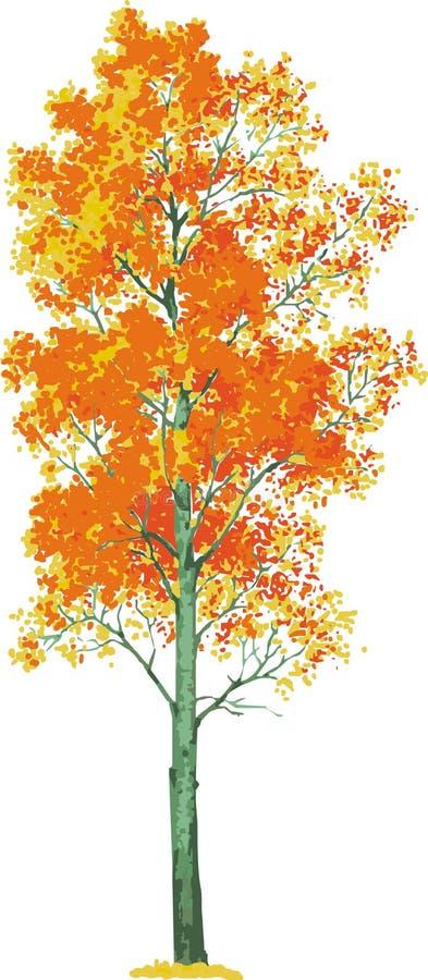 albero della tremula. Vettore illustrazione di stock