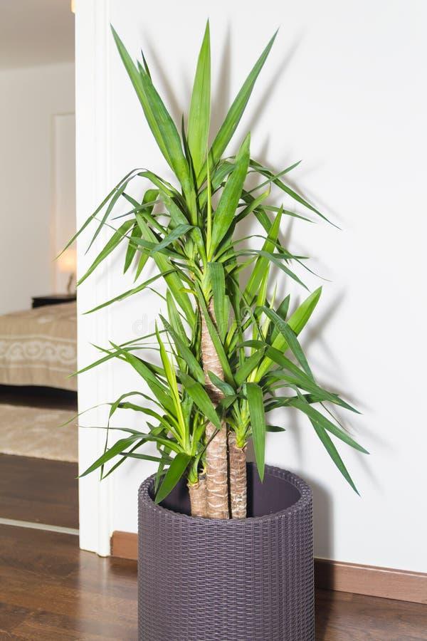 Albero della vita in vaso tricottato che decora l 39 angolo for Decora la stanza girlsgogames