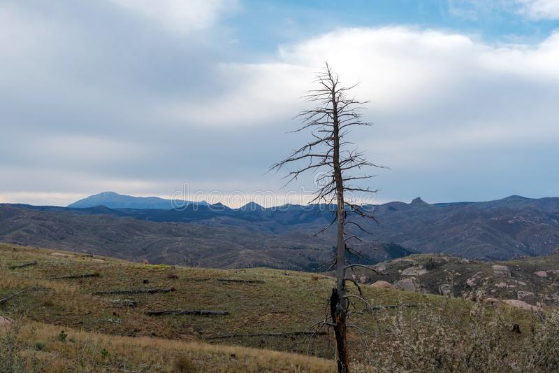 Albero della vittima dell'incendio forestale con le montagne fotografie stock libere da diritti