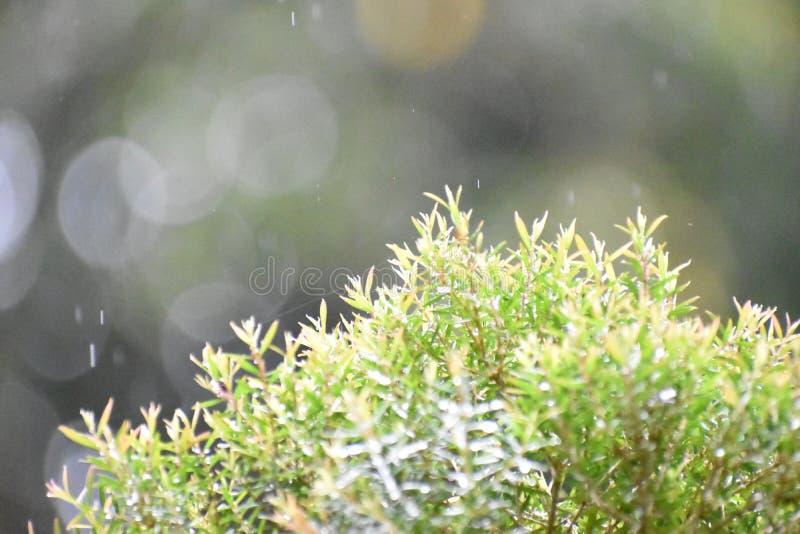 Albero delle goccioline della pioggia immagine stock libera da diritti