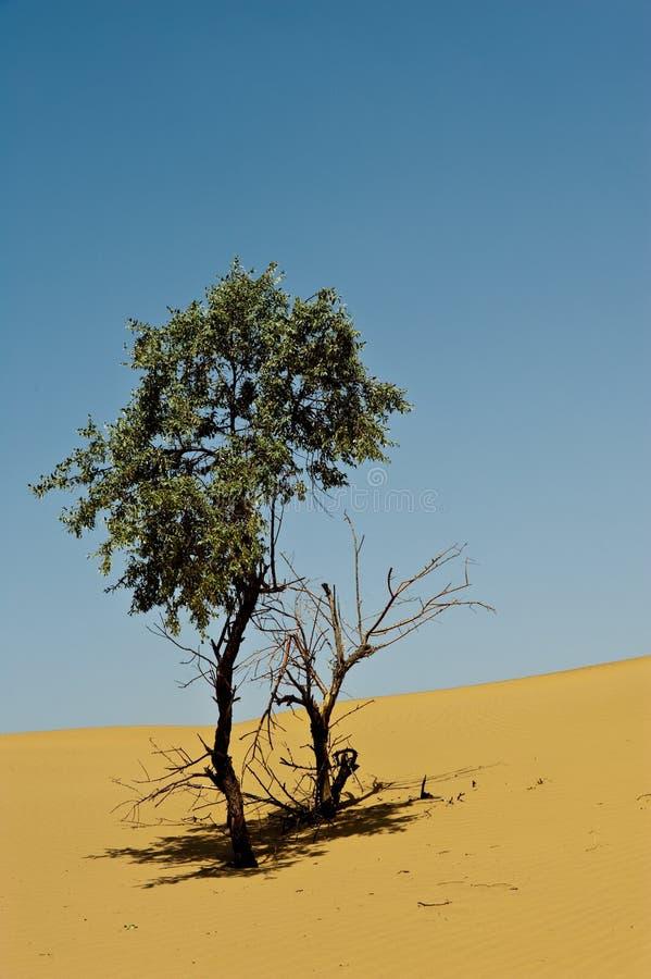 Albero in deserto fotografie stock