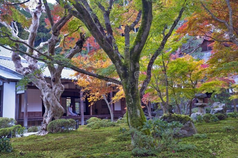 Albero di acero rosso giapponese durante l 39 autunno in for Acero rosso giapponese