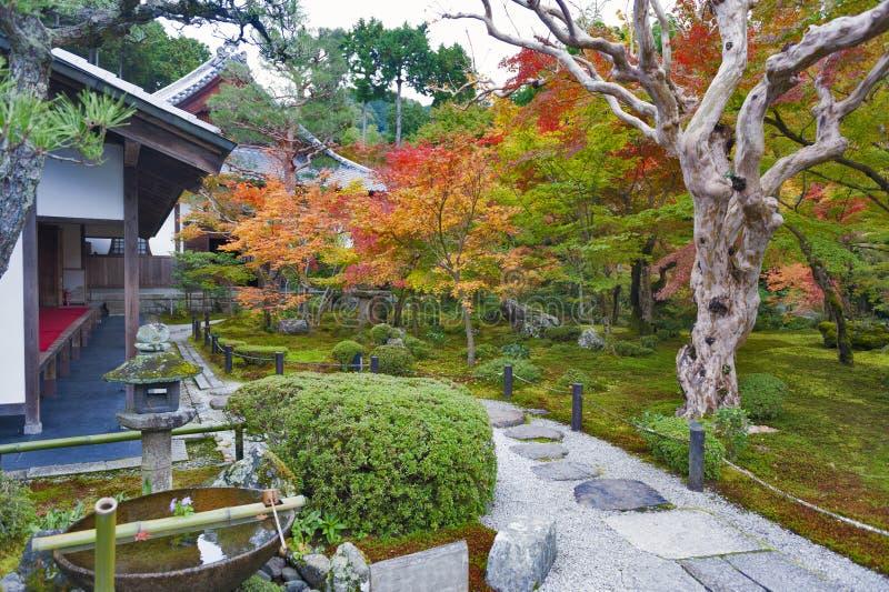 Albero di acero rosso giapponese durante l'autunno in giardino al tempio di Enkoji a Kyoto, Giappone fotografie stock libere da diritti