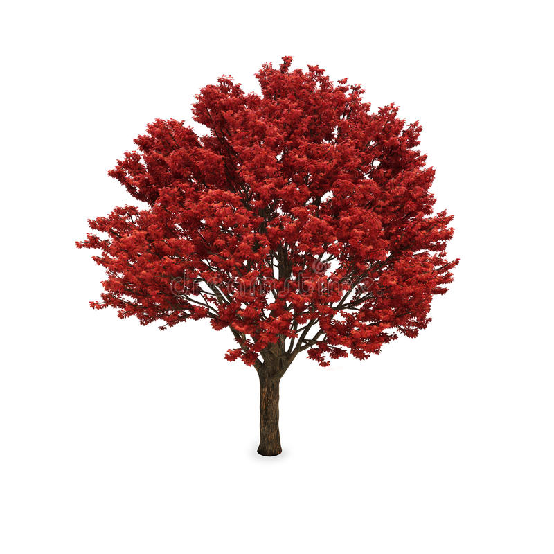 Albero di autunno con fogliame rosso fotografia stock