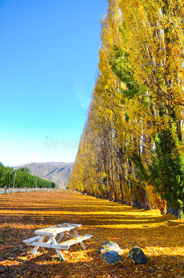 Albero di autunno con la bella natura in Nuova Zelanda fotografia stock libera da diritti