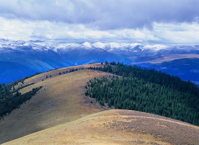 Albero di autunno e montagna della neve fotografie stock