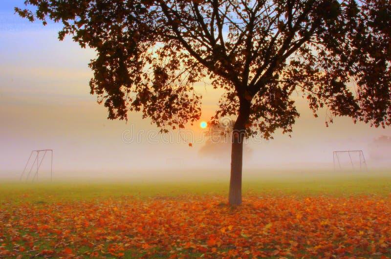 Albero di autunno ed obiettivo du di calcio fotografie stock