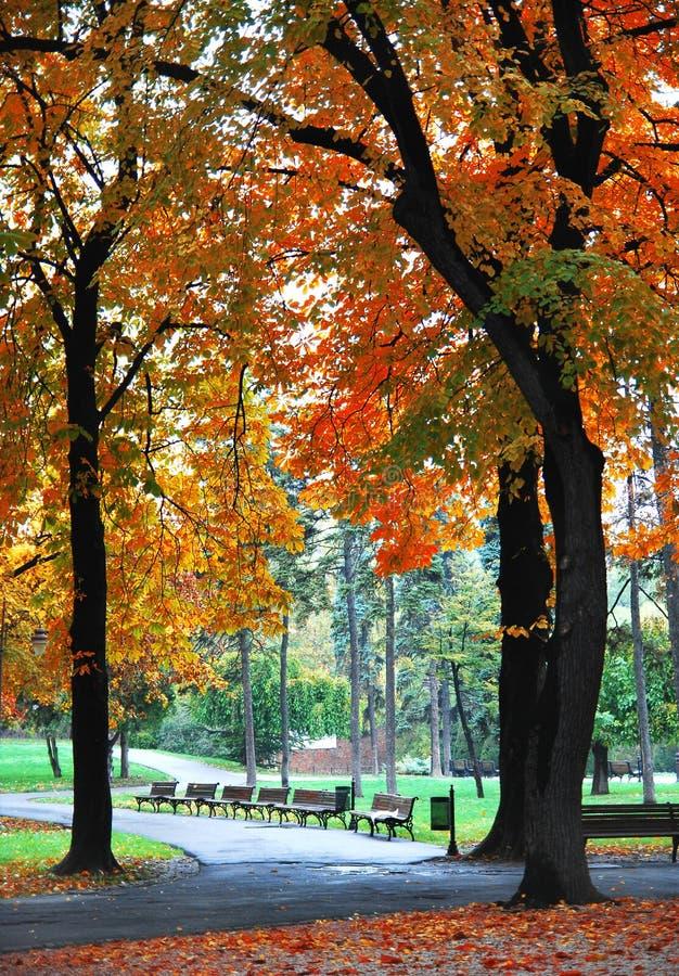 Albero di autunno in ottobre fotografia stock libera da diritti
