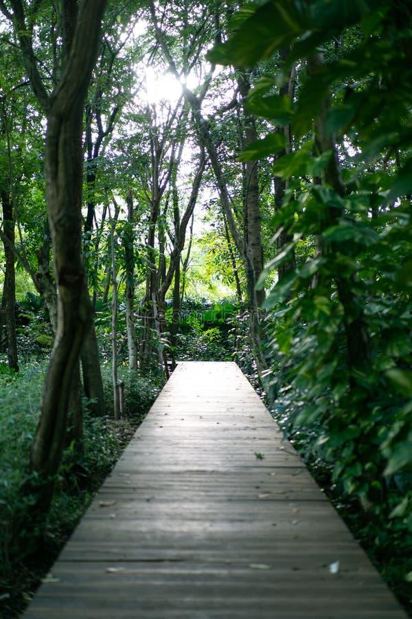 Albero di bambù con il modo d'annata di legno della passeggiata nella foresta con la luce di scintillio fra la foglia fotografie stock libere da diritti