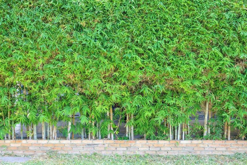 Albero di bambù con la decorazione naturale del recinto delle foglie verdi, fondo all'aperto fotografie stock