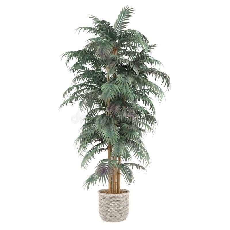 Albero di bambù della pianta della palma nel vaso illustrazione vettoriale