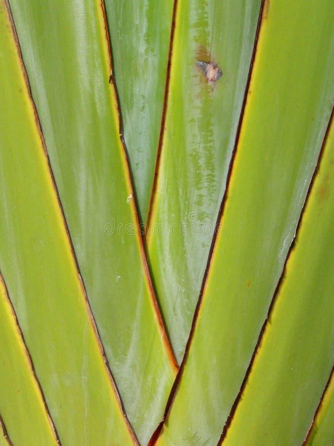 Albero Di Banana - Particolare Immagini Stock Libere da Diritti