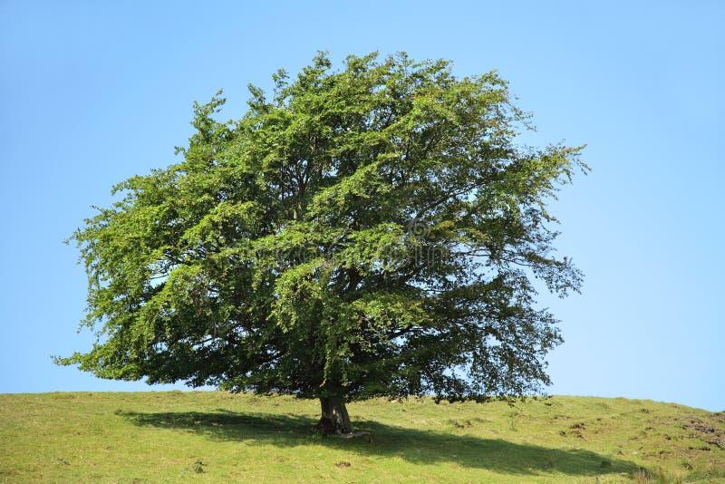 albero di bellezza immagine stock