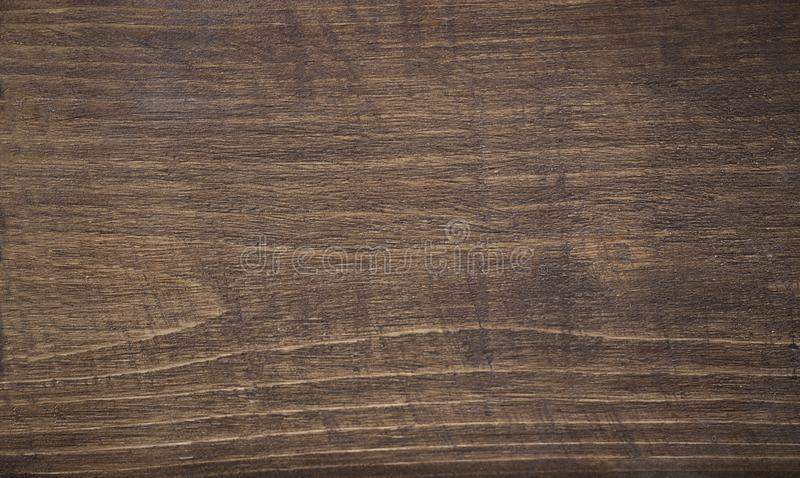 albero di cedro macchiato fotografia stock libera da diritti