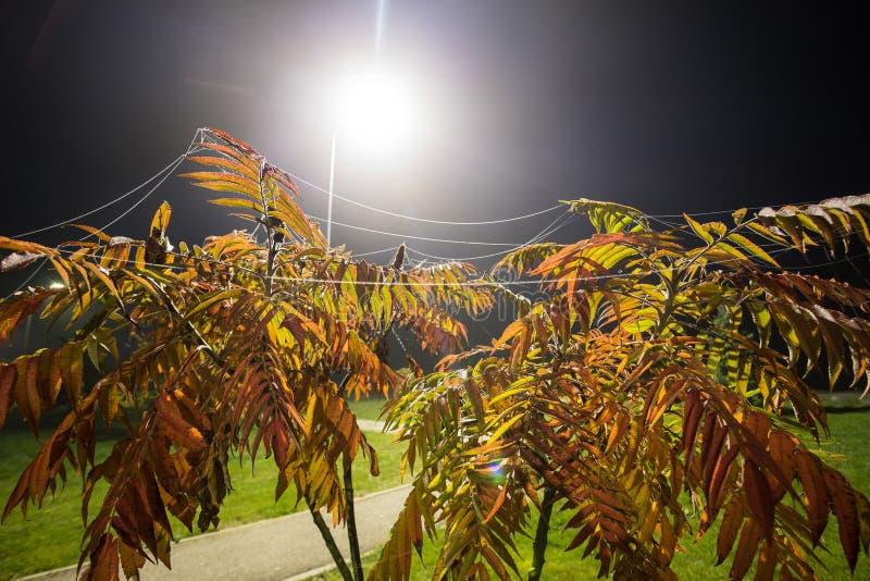 Albero di cenere alla notte con nebbia fotografie stock libere da diritti