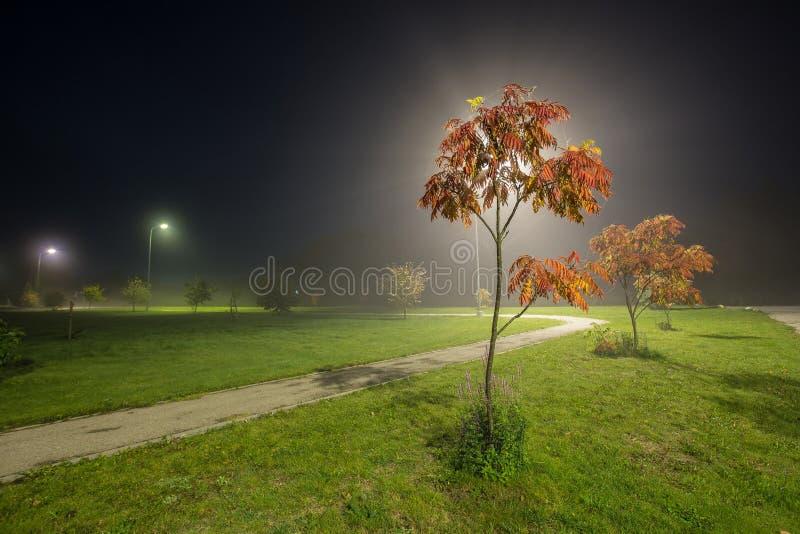 Albero di cenere alla notte con nebbia fotografie stock