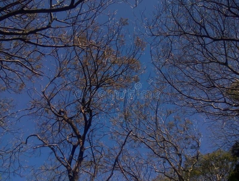 Albero di cielo blu fotografia stock