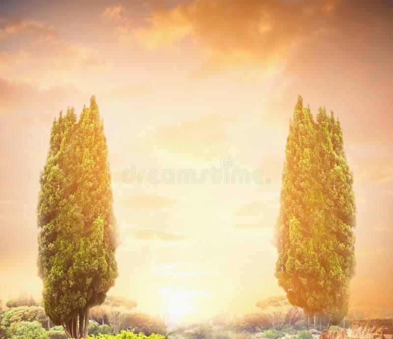 Albero di cipresso due sopra il cielo di tramonto, fondo della natura fotografia stock libera da diritti