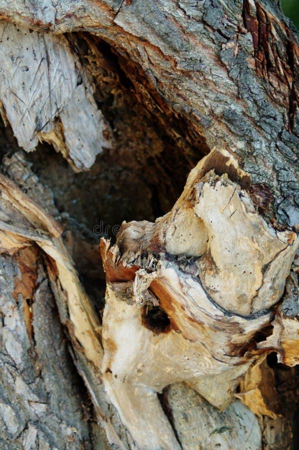 ALBERO DI CORTECCIA DI STRUTTURA funghi del ceppo di autunno immagini stock libere da diritti