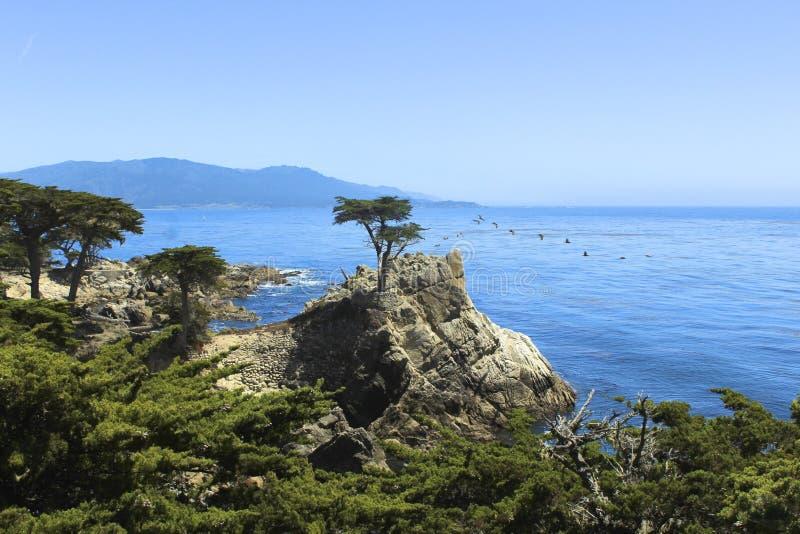 Albero di Cypress solo fotografie stock