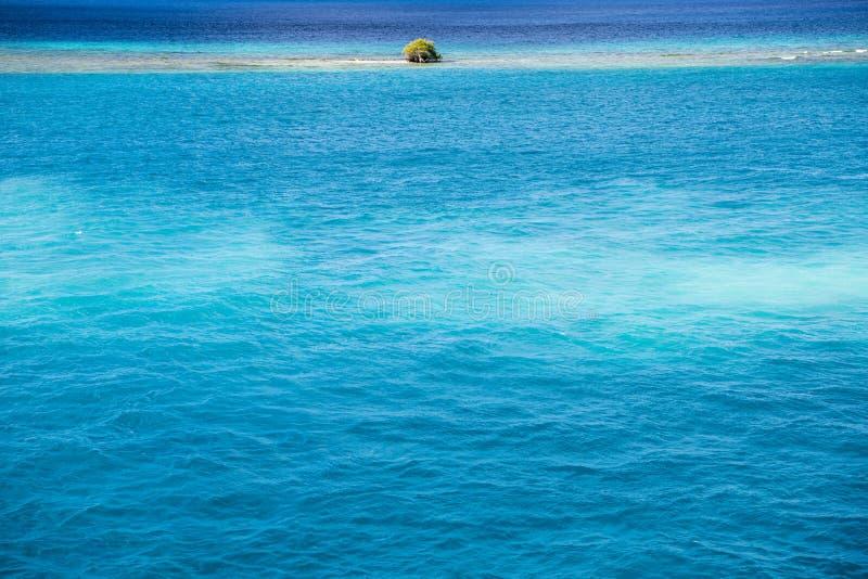Albero di divi di Divi - coriaria di Libidibia - sommerso sul banco di sabbia, Aruba immagini stock libere da diritti