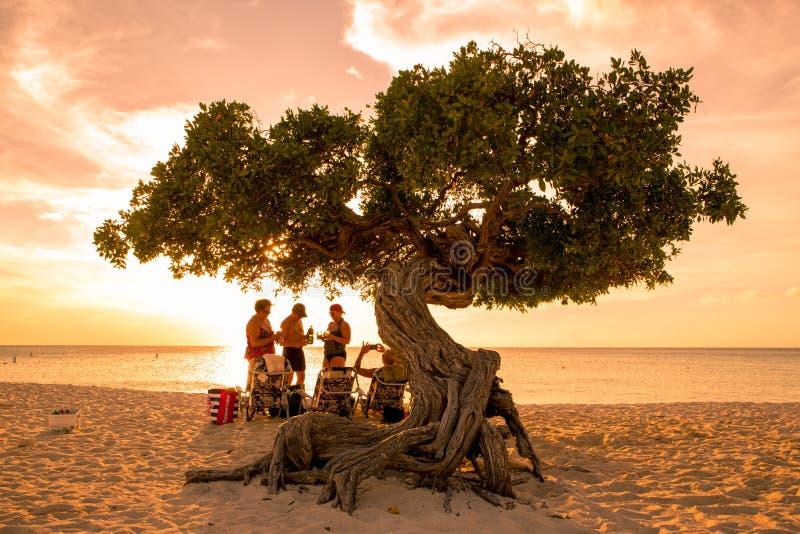 Albero di Eagle Beach Aruba Divi Divi fotografie stock