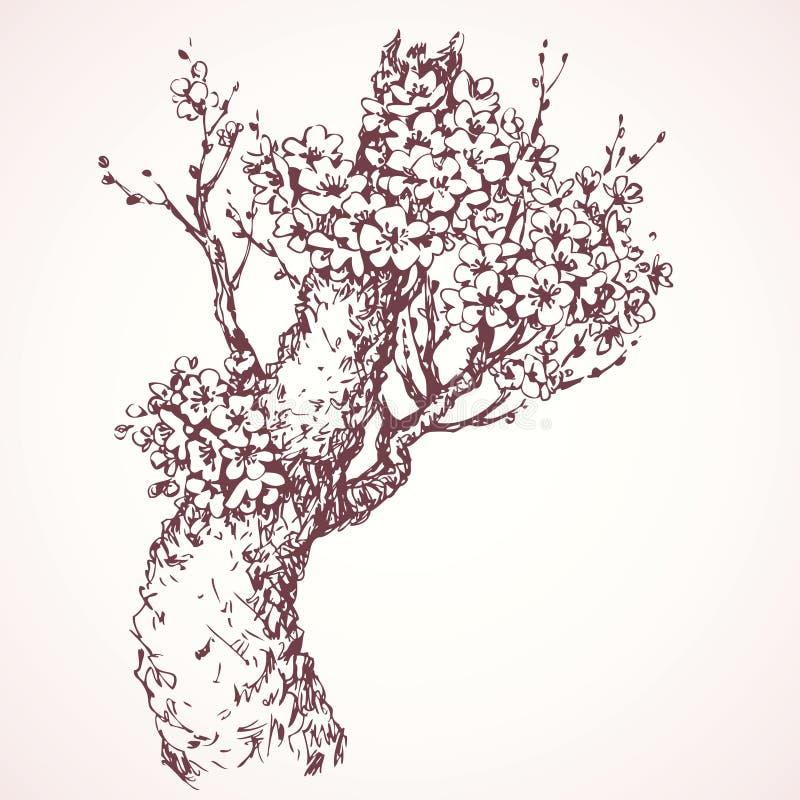 Albero di fioritura della primavera Illustrazione di vettore royalty illustrazione gratis